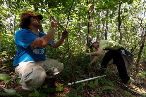 Tue, 06/07/2011 - 10:34 - Diameter Measurements, Tyson Forest Ecology & Dynamics Plot.  PC: Jonathan Myers
