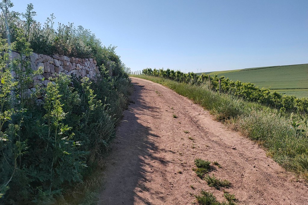 Trockenmauer und Blühendes an der Hiwweltour Heideblick
