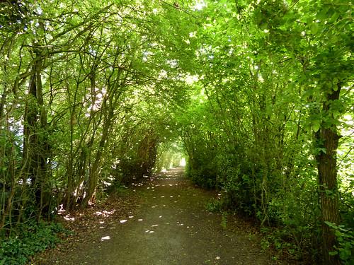 Bridle Path Project