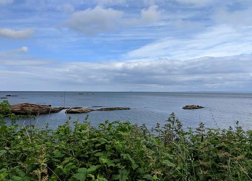 Seals, Firth of Forth, Seafield, Kirkcaldy, Fife