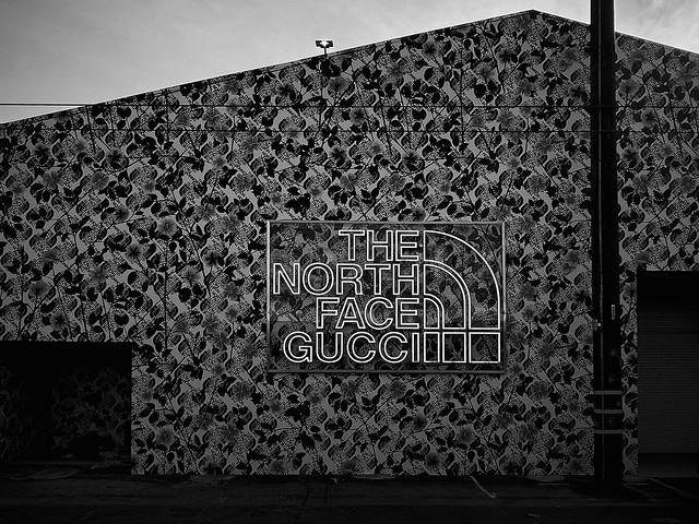 the north face gucci.