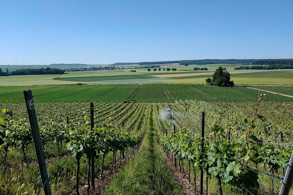 Hiwweltour Heideblick bei Neu-Bamberg und Siefersheim