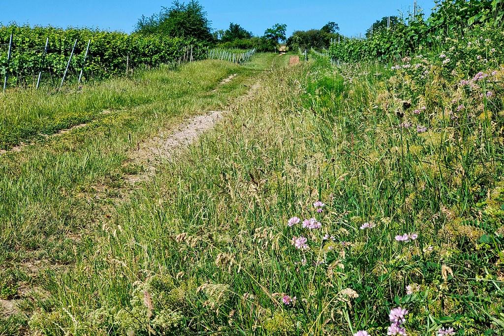 Blühende Pflanzen am Wegesrand - Hiwweltour Heideblick