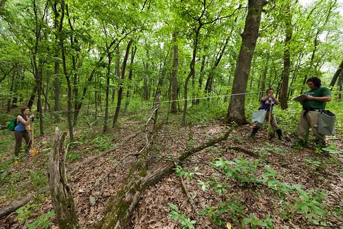Tue, 05/31/2011 - 12:01 - Stem Mapping, Tyson Forest Ecology & Dynamics Plot.  PC: Jonathan Myers