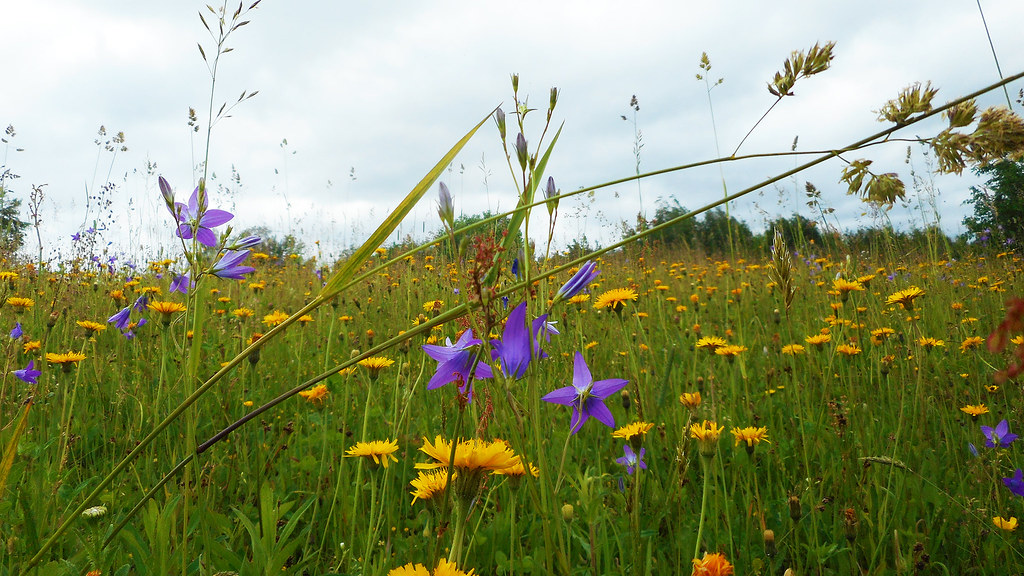 Summer Flowers 25