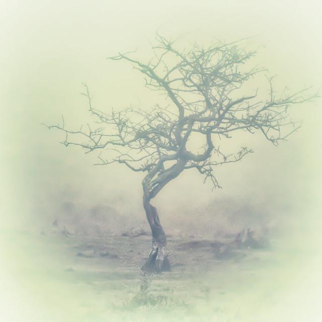 Moorland Mist.