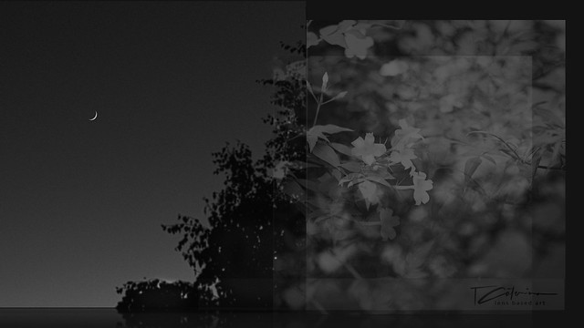 . (I photograph) priviledge, improbability, chimeras, evanescence .