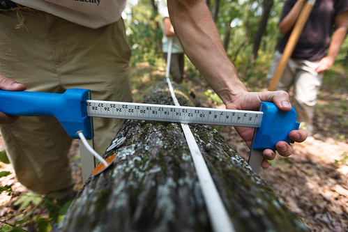 Mon, 07/02/2012 - 12:50 - Coarse-Woody Debris Census, Tyson Forest Dynamics Plot.  PC: Jonathan Myers
