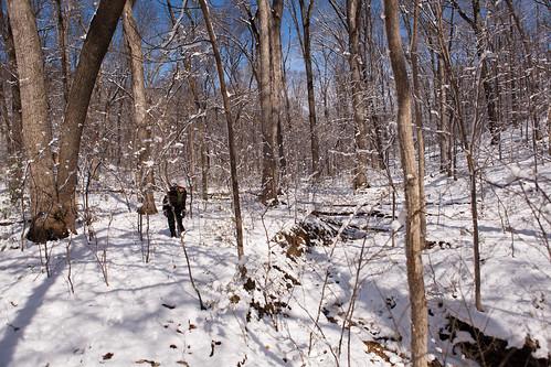 Sun, 03/27/2011 - 10:28 - Valley in Winter, Tyson Forest Dynamics Plot.  PC: Jonathan Myers