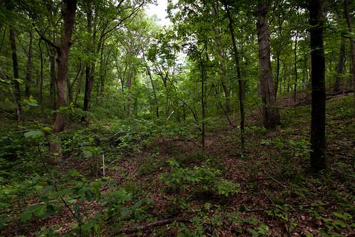 Fri, 05/27/2011 - 11:57 - Valley, Tyson Forest Dynamics Plot.  PC: Jonathan Myers