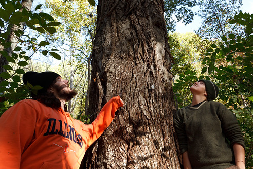 Fri, 10/21/2011 - 14:43 - The Big Hickory, Tyson Forest Ecology & Dynamics Plot.  PC: Jonathan Myers