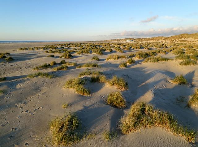 Terschelling - Jonge duinen