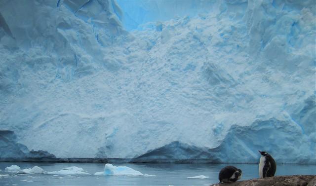 Neko Harbor, Antarctic Peninsula