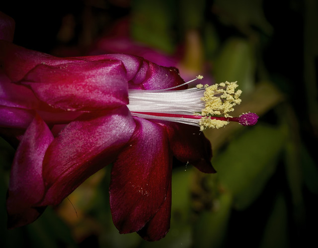 Zygote. Cactus Flower.