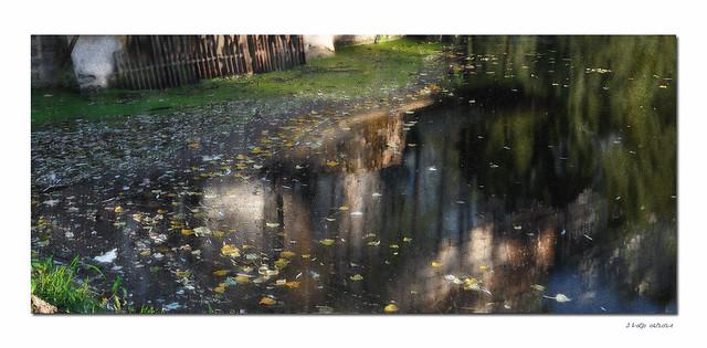 Edge of a pond, Evening light  -  En bord d'étang, lumière du soir