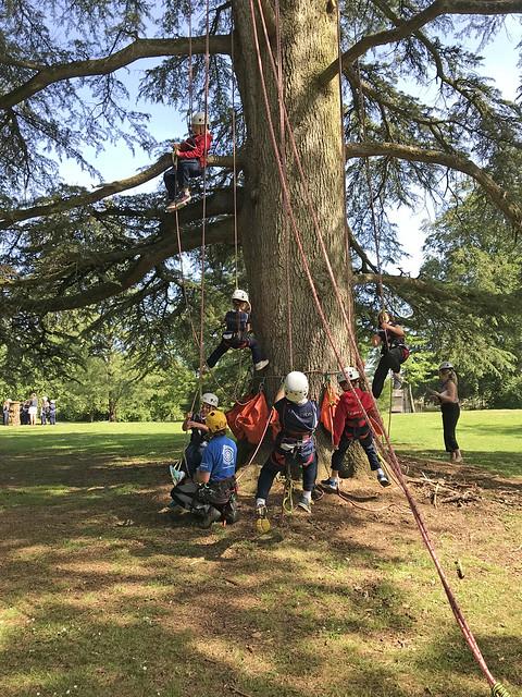 Tree Climbing | Years 1 - 4