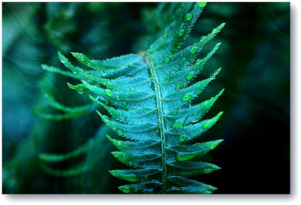 fern  in the rain