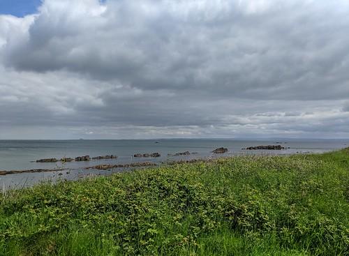 Seals, Seafield, Firth of Forth, Fife