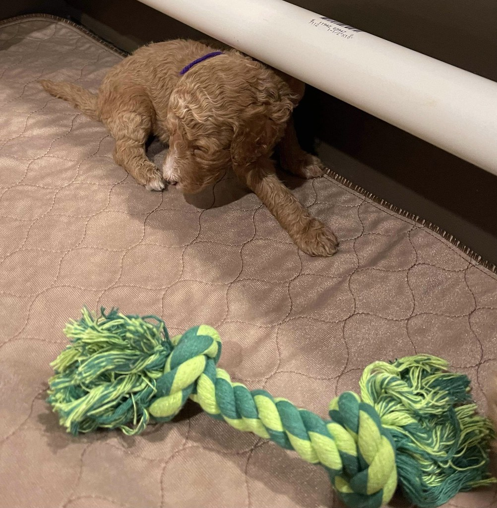 Pearl's Precious Gems try the ropes in today's class.