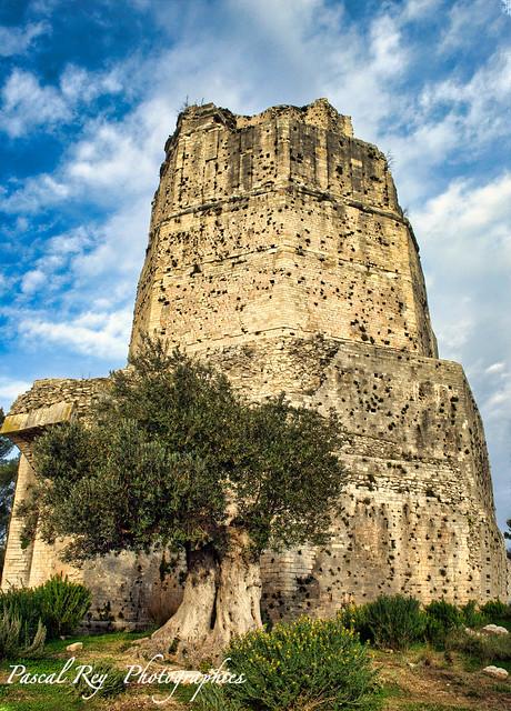 La tour Magne et son olivier...
