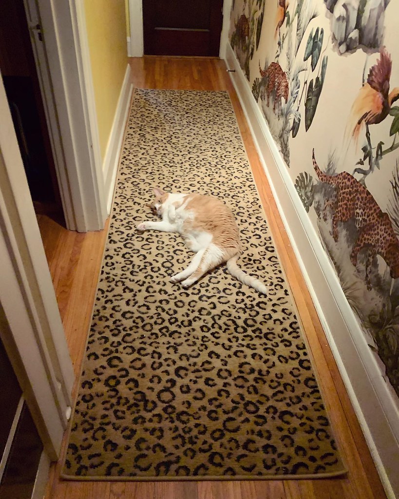 My other son, Fred the cat, posing in the hallway with our new retro wallpaper with jaguars and tropical birds
