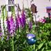 Foxglove, Hosta and Peony in front garden