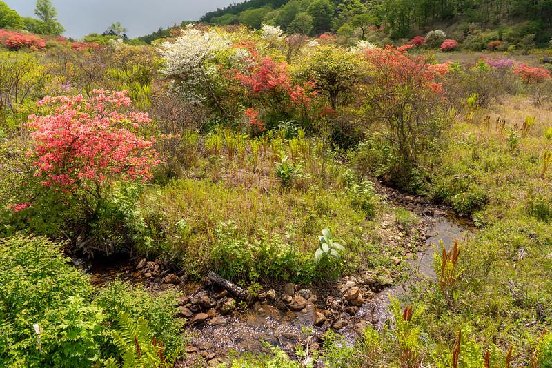 小川が流れる井戸湿原