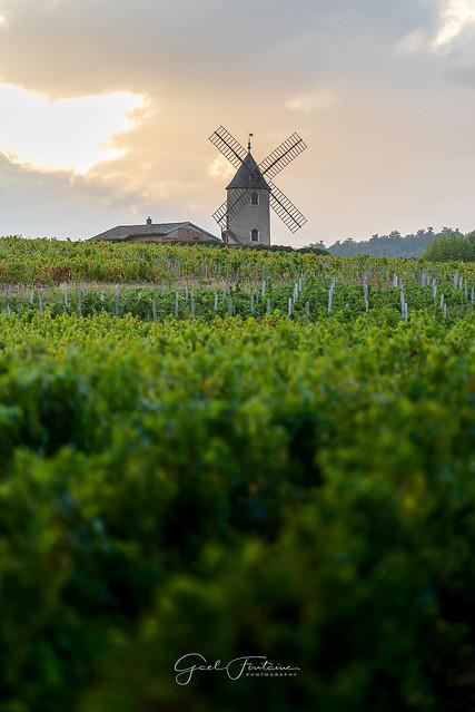 Coucher de soleil sur le vignoble de Moulin-A-Vent