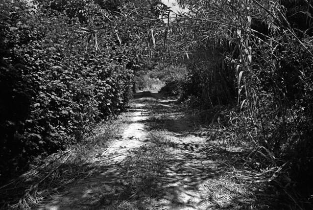 210615  percorso di campagna