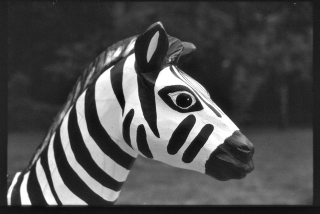 Zebra auf dem Spielplatz am Lippesee