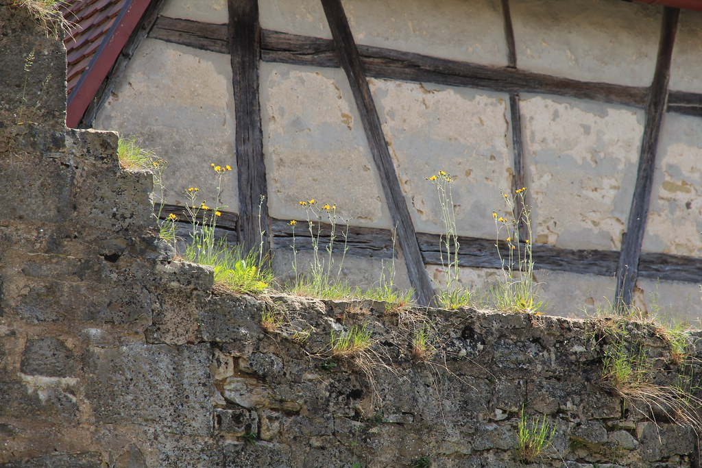 Rothenburg o.d.T