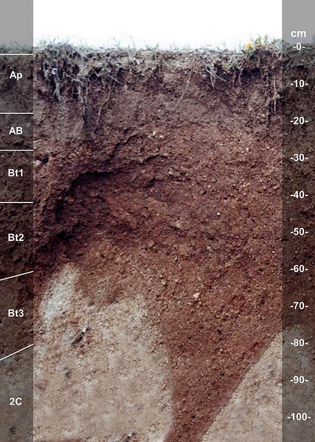 Nineveh soil series
