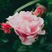 Flowers in June 🌸