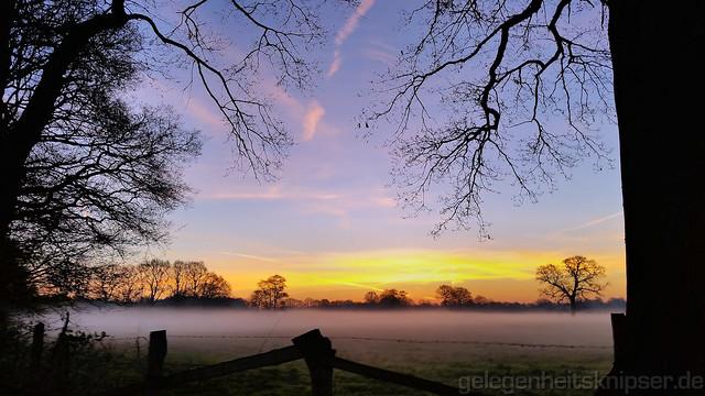 Sonnenaufgang am Arbeitswegkurvenbaum