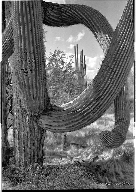 Saguaro Vision