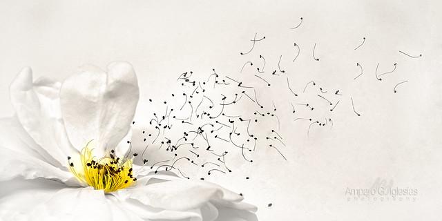 La semilla que no quería germinar - Amparo García Iglesias