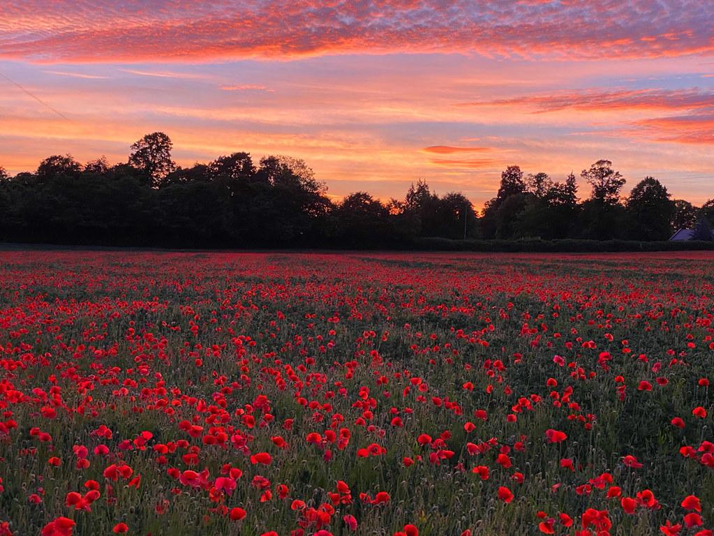 20210614-Poppy Field Sunset