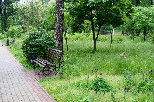 A lonely bench in the park…