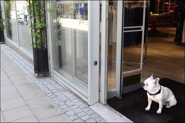 Doordog