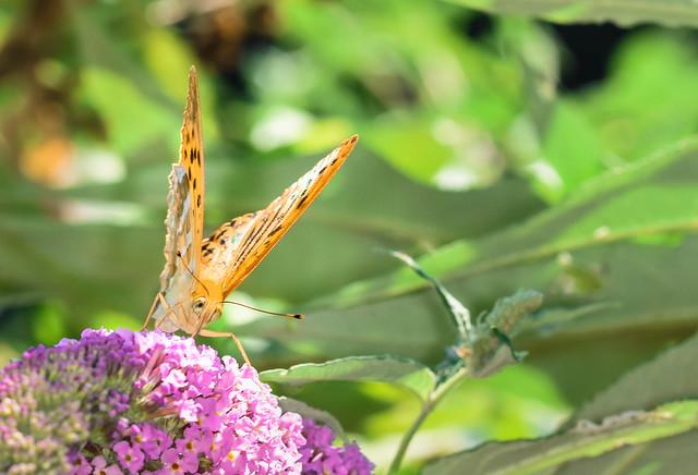 Flora e fauna dell'Adda