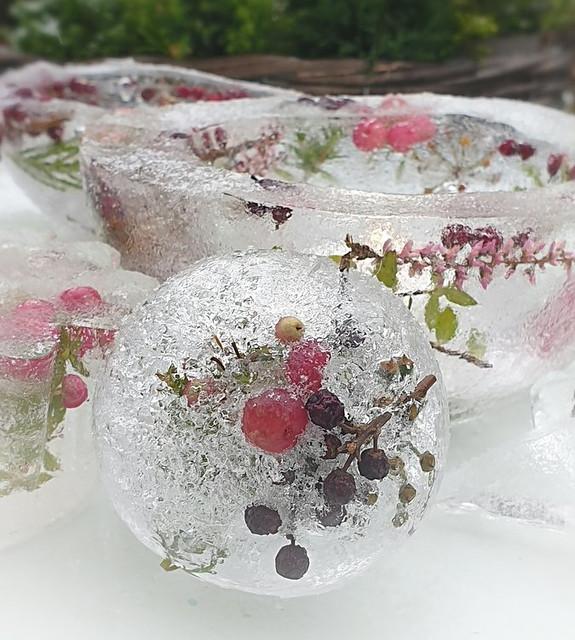 Botanical Berry ice