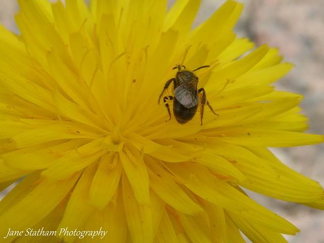 Beautiful Bug Botty Thursday.