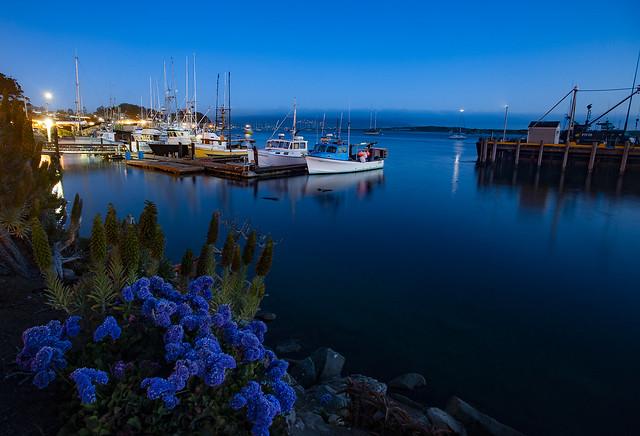 Marina In Blue