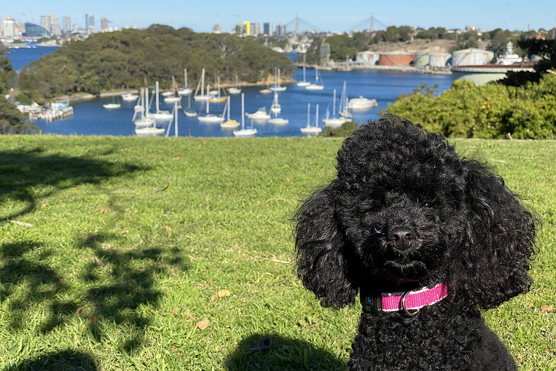 Scully at Holloway Reserve