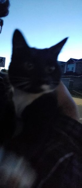 SIGHTING black & white cat #Evergreen Pls RT, share for owner awareness. Hey folks we found a small black and white cat in Evergreen (looks quite young). Gained some trust but the cat ended up getting spooked by some dogs barking and ran off. We did grab