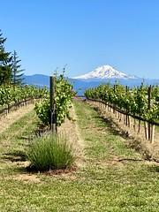Stave & Stone Wine Estates, Oregon