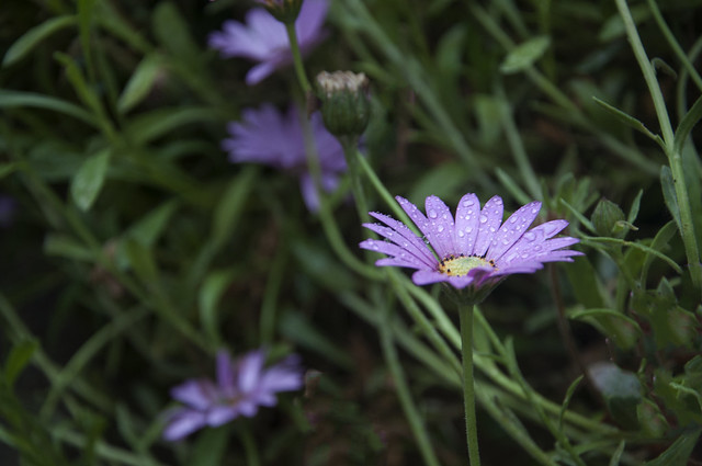.. I saw a flower saying my favouite prayer ..