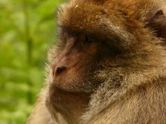 Trent ham Monkey Forest