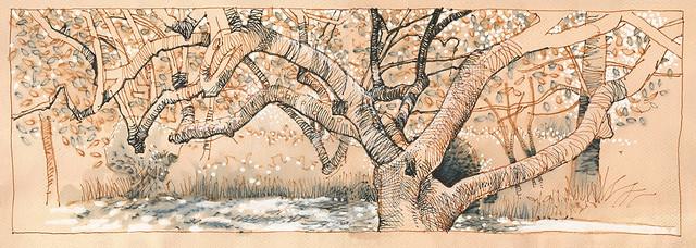 Sun on Magnolia - Priory Park, Malvern