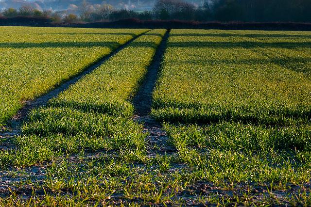 Lines in a field.